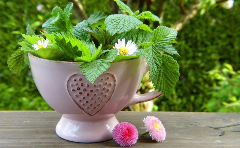 Napary ziołowe na ratunek wiosennemu przesileniu